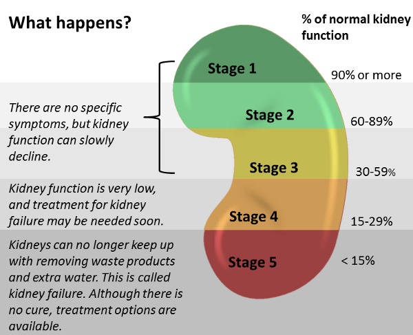 Stages of Kidney Disease